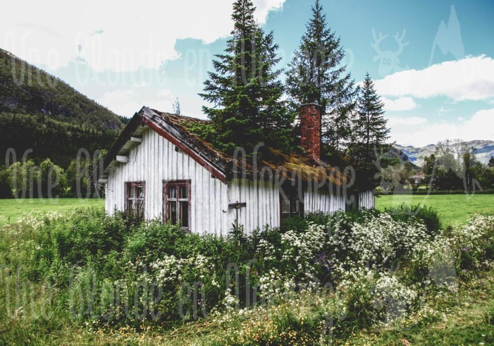 Maison avec des arbres sur le toit
