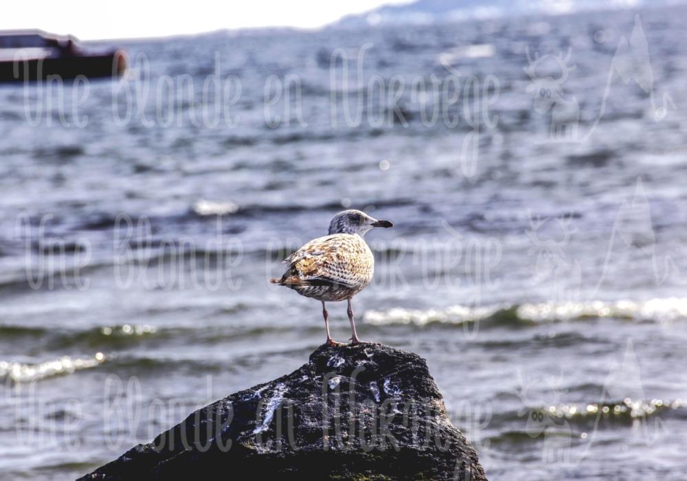 Oiseau penseur