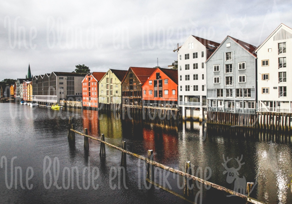 Trondheim gris
